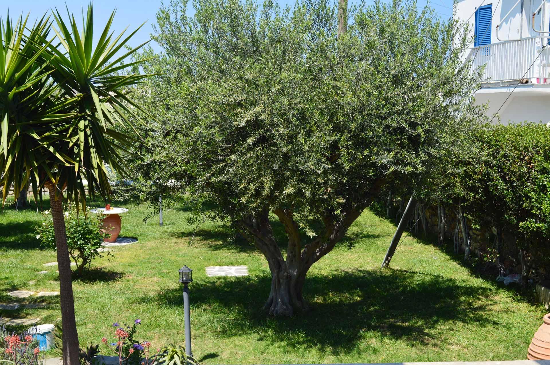 Pension-sofia-garden.