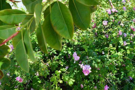 Pension-sofia-flowers