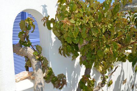 Pension-sofia-tree